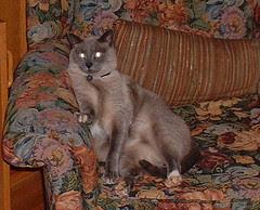 mojo sitting