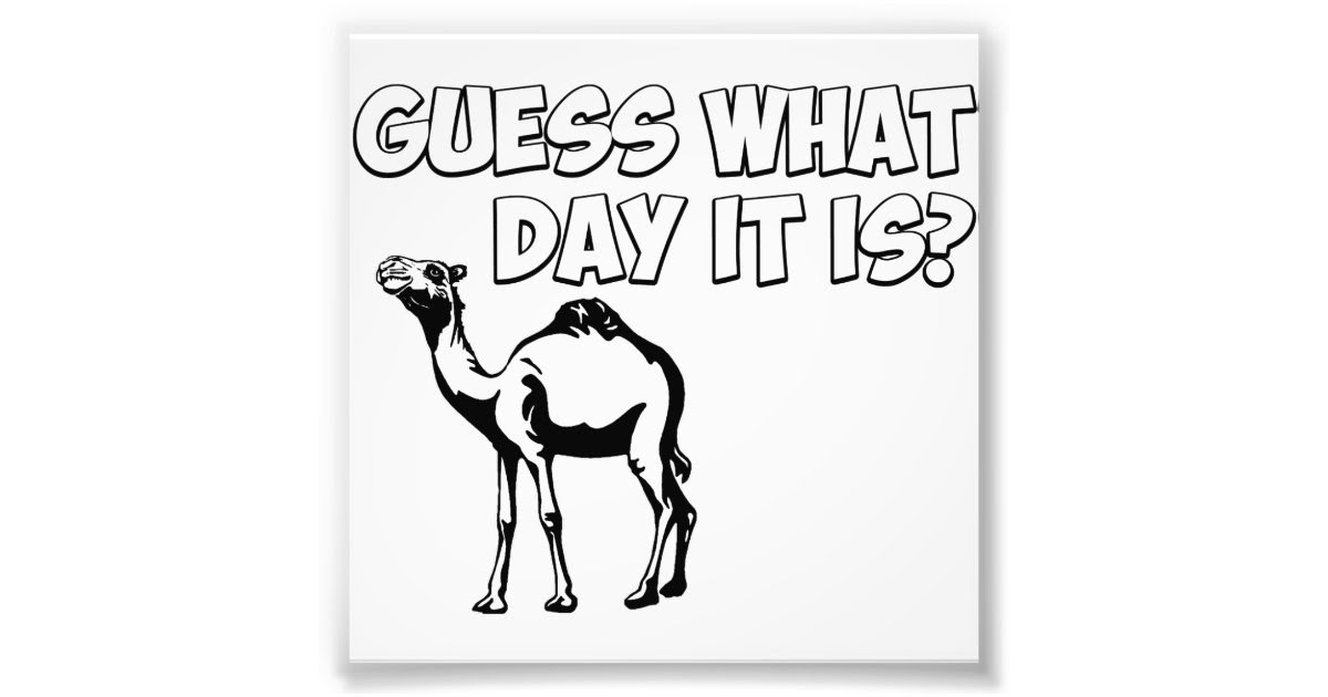 Guess What Day it Is? Hump Day Camel Photo Print | Zazzle