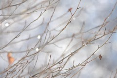 winter-branches
