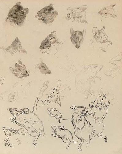 Study of field mice