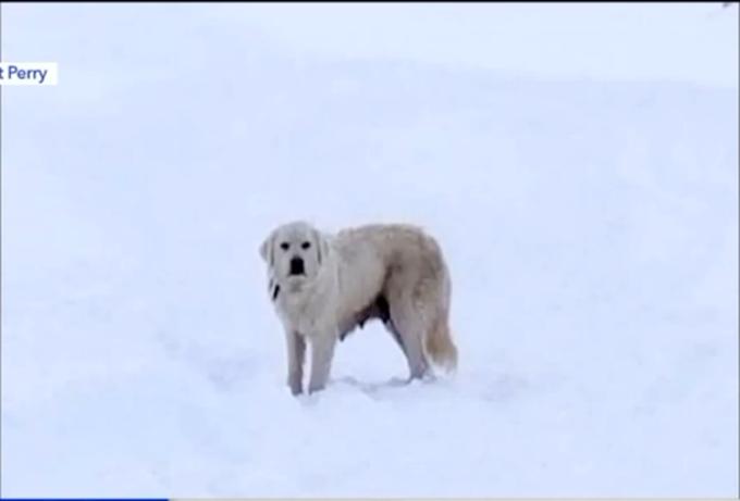 Pareja pasea por la nieve hasta que descubre las señales de una mamá angustiada suplicando ayuda