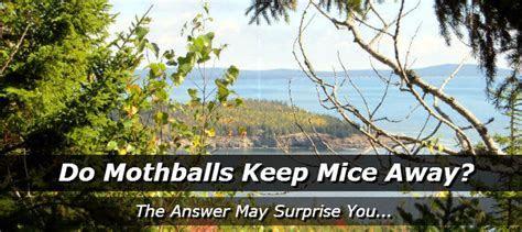 Do Mothballs Keep Mice Away?   How to Get Rid of Mice