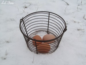 eggs in the snow