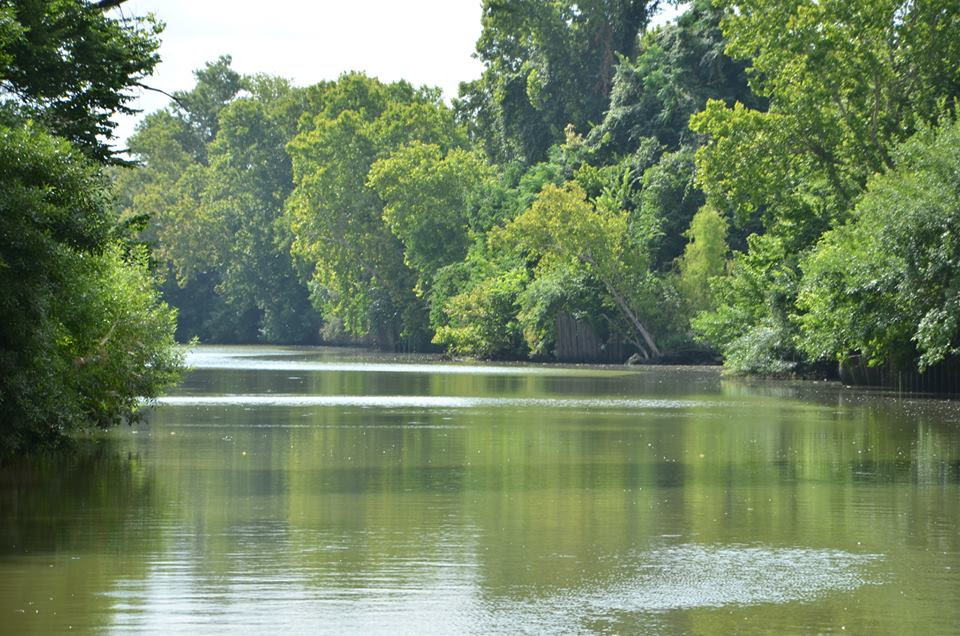Bayou Wilderness