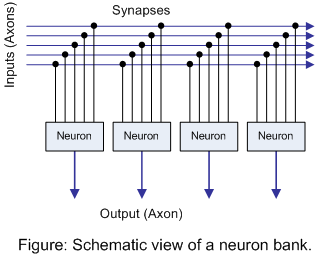 Figure: Schematic view of neuron bank.