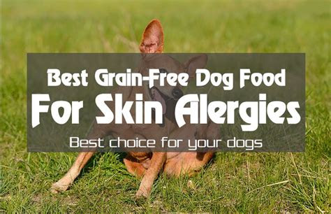 dog health    grain  dog food