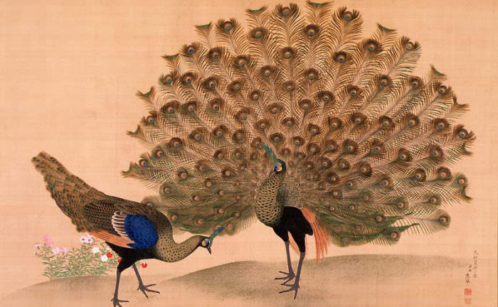 peahen and peacock