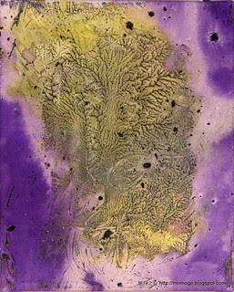 珊瑚(未簽名作品)