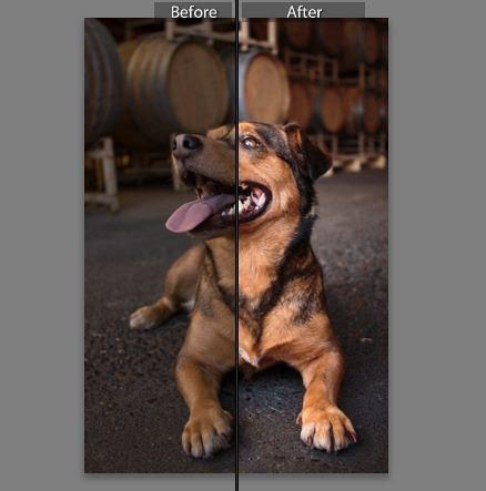 Before After snip brighten dark photo