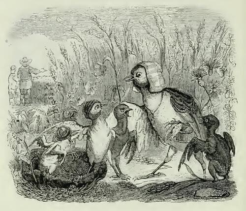Alauda et Pulli Eius
