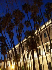 Las palmeras de la Aduana