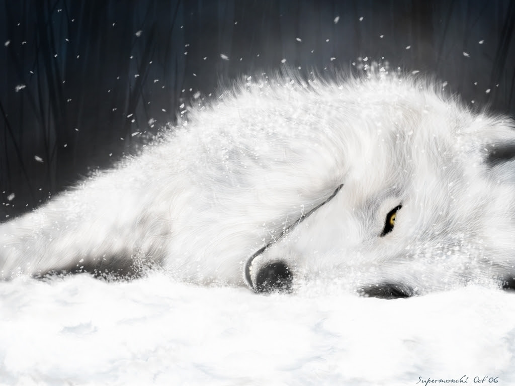 White Wolf Wallpaper Important Wallpapers