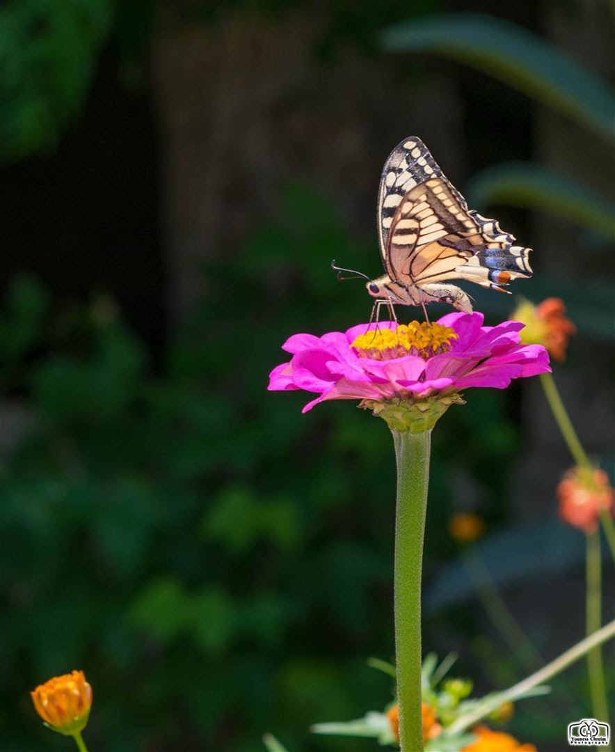 Good Morning My Friends Butterfly Insects Insect Flower Flowers