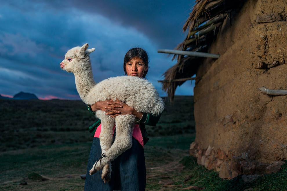 Девочка с альпакой в деревне в Перу