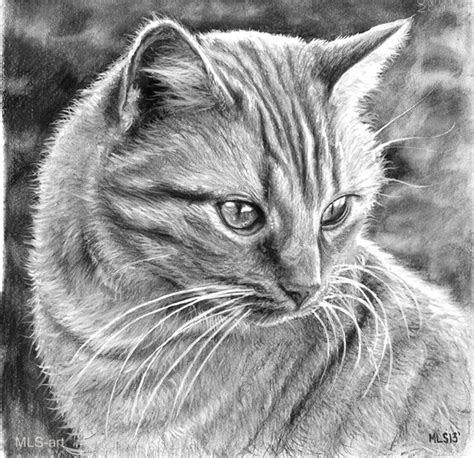 beautiful cat drawings  color pencil drawings