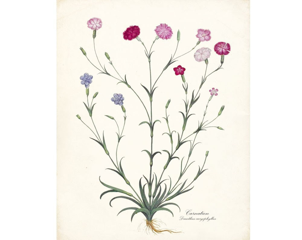 Antique French Flower-Carnation No. 2