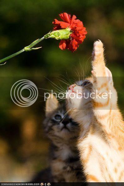 αγάπη μου το θες αυτό το λουλούδι?