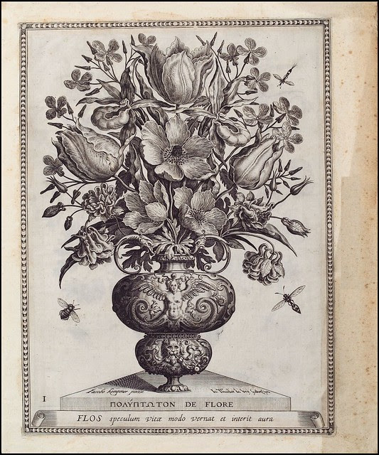 Flowers in vase - 16th c. engraving by Theodore de Bry - Herzog