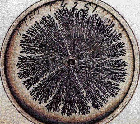 vie petri bacterie jardin 12 De la vie dans le petri  technologie art