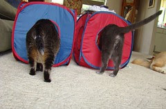 Catnip butts