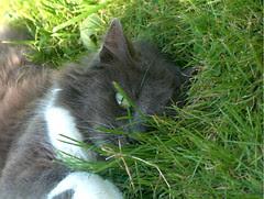 Miss Cat Flower souhaite un joyeux noel à tous