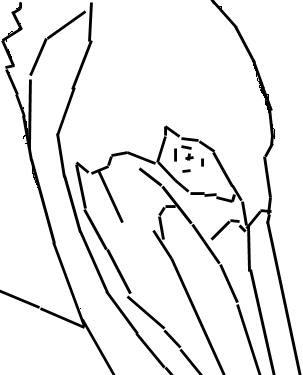 Pelican Outline