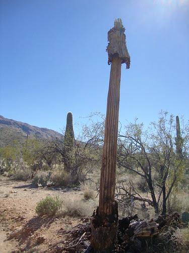 DSC080Saguaro National Park East, Loma Verde Loop68
