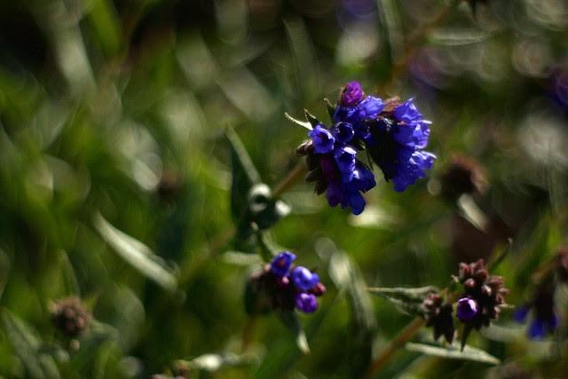 spring (blue)