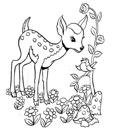 gazelle coloring pages  school preschool  kindergarten