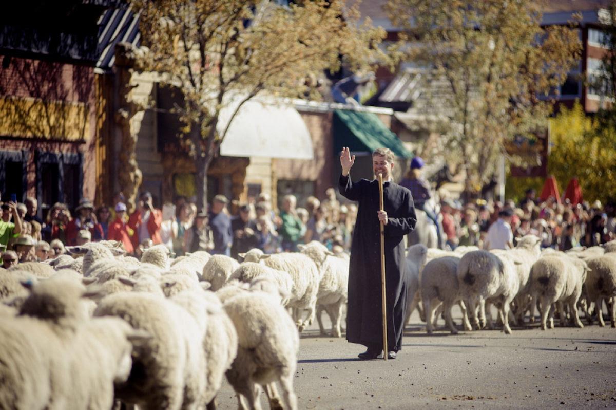 Conheça o Festival de Arrasto de Ovelhas 03