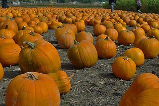 HMB Pumpkin Fest - Pumpkin galore