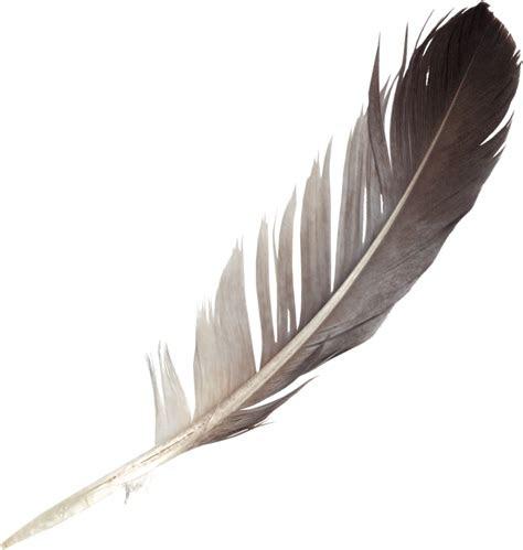feathers png transparent onlygfxcom