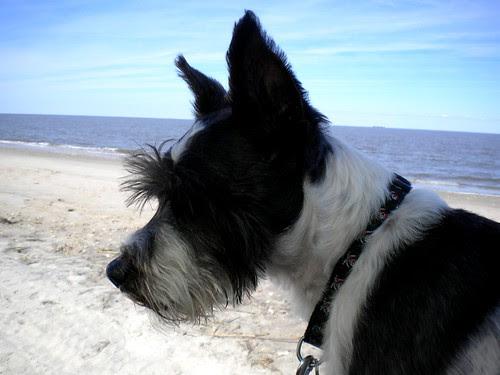 Broadkill beach
