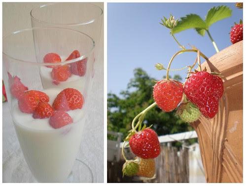 Balcony Strawberries