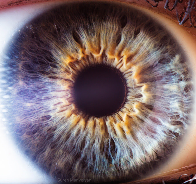 Image result for human eye