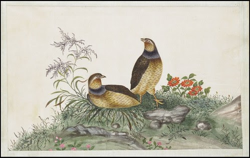 Bird Album
