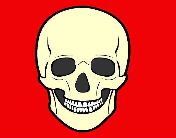 Dibujo De Cráneo Humano Pintado Por Ryuhakamy En Dibujosnet El Día