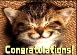 congratulations kitten