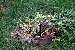 harvest pile