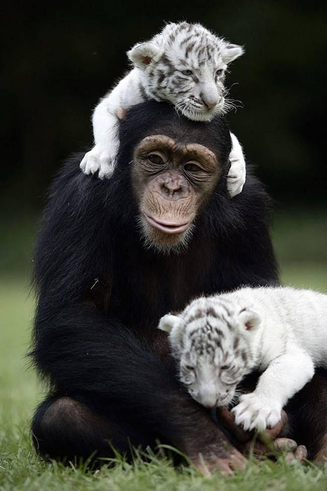 amizades-incomuns-com-animais-10