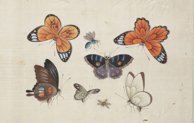 hand-painted butterflies