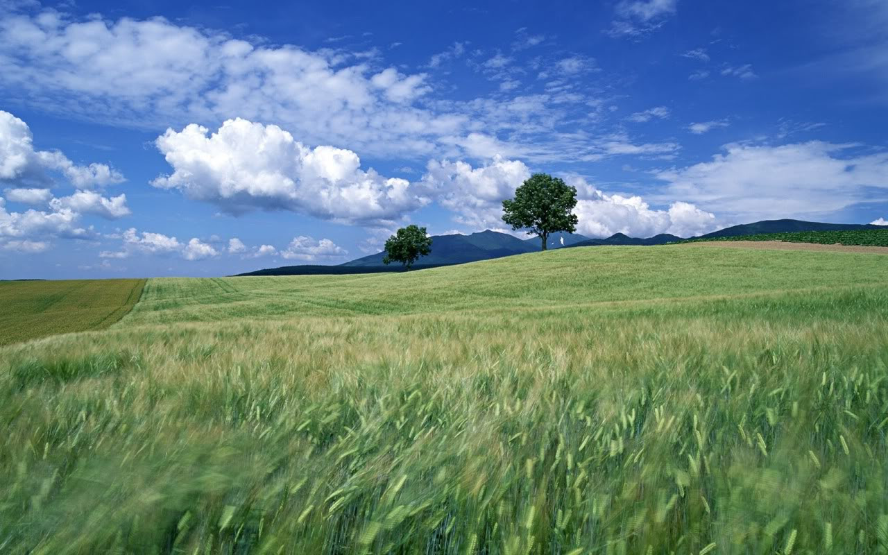 Field Background wallpaper | 1280x800 | #7936