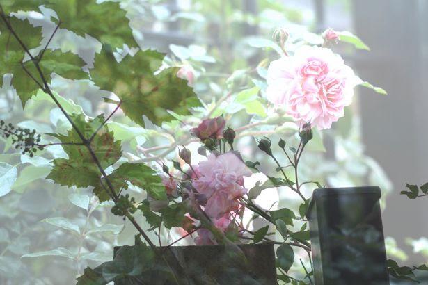 photo autumn6_zps771fdc14.jpg