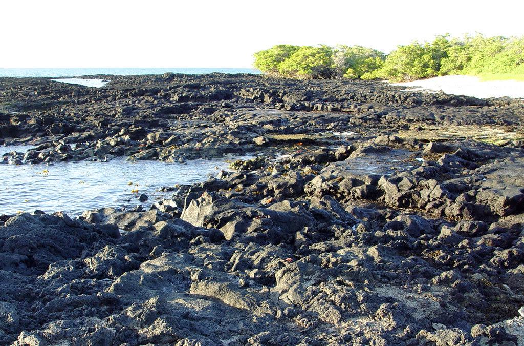 DSC00830 Galapagos Sally Lightfoot Crab habitat