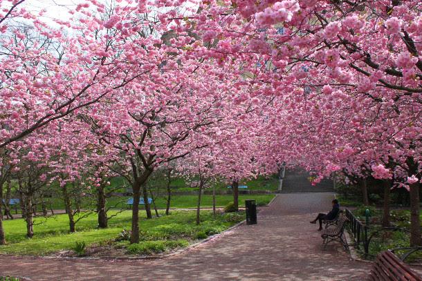 Resultado de imagem para 40ª Festa das Cerejeiras do Parque do Carmo 2018