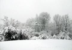 Snow_4111b