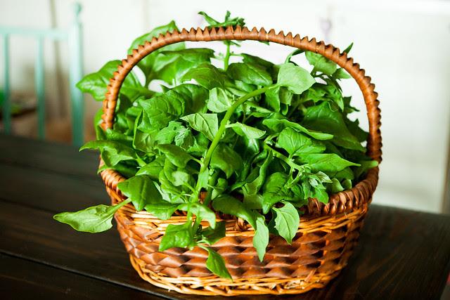 Spinach ChipsIMG_4579