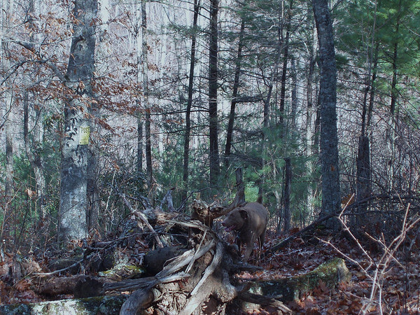 Hawkeye in the woods