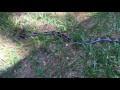 Snake Bites At Woman's Camera - Video