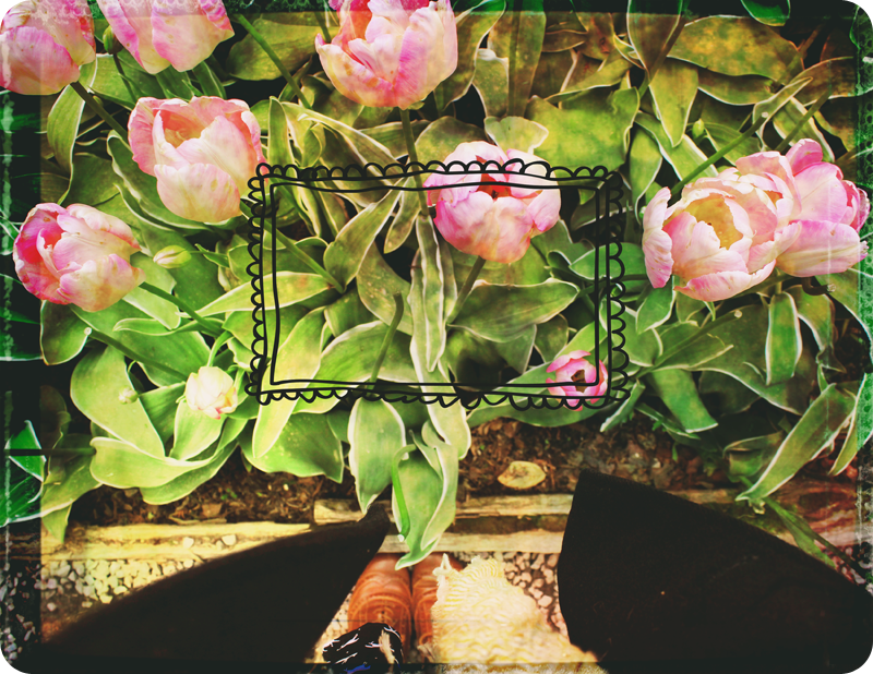 {layout} tulips! | frame